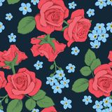 Red roses and myosotis flowers on dark blue background. Seamless pattern. Vector illustartion. Can use for background greeting cards and invitations of the Stock Photo