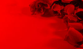 Red Roses 0n Red Background Royalty Free Stock Photos