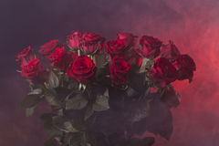 Red roses on a neon red smoky background Stock Photos