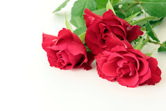 Red roses. On  old wooden  background Royalty Free Stock Images