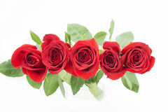 Red roses on one row from the top. Five red roses in one row, isolated. view from the top. green leaves are behind of red rosebuds. horizontal image has white Stock Image