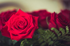 Red roses over valentines Royalty Free Stock Images