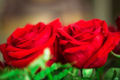 Red roses over valentines day Stock Image