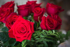 Red roses over valentines day Stock Images