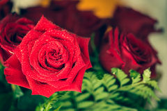 Red roses over valentines day Stock Photo