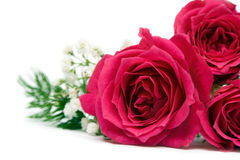 Red roses over white background Stock Images