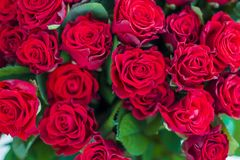 Red roses pattern. Close-up royalty free stock photos