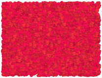 Red Roses Petals background Stock Photos