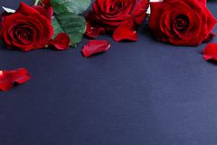 Red roses with petals on a black background, are located on top, flowers without an occasion, free space for text. Stock Images
