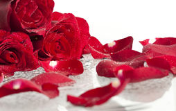 Red roses and petals Stock Image