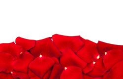 Red roses petals Royalty Free Stock Photos