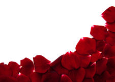 Red roses petals Stock Photography