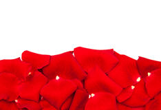 Red roses petals Royalty Free Stock Images