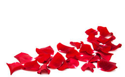 Red roses petals Royalty Free Stock Image