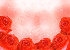 Red roses with petals Royalty Free Stock Photo