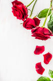 Red roses with petals on white wooden background, top view. Valentines day card. Place for text Stock Photo