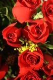 Red Roses picture Stock Image