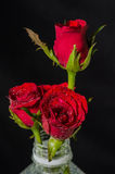 Red roses in plastic bottle. Isolated on black Stock Photo