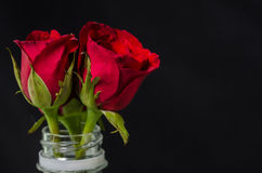 Red roses in plastic bottle. Isolated on black Royalty Free Stock Photography