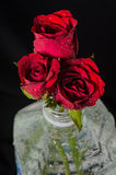 Red roses in plastic bottle. Isolated on black Stock Images