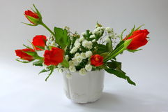 Red roses in pot Stock Image