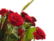 Red roses for a present royalty free stock images