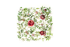 Red roses or ranunculus and green leaves on white background Stock Images