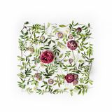 Red roses or ranunculus and green leaves on white background Stock Image