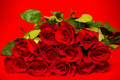 Red roses on red background Royalty Free Stock Photo