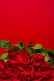 Red Roses on a red background royalty free stock images