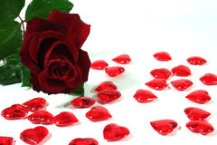 Red roses and red hearts as background. Red roses and red hearts on white background royalty free stock image