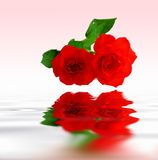 Red roses reflecting on water Royalty Free Stock Photos