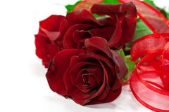 Red roses with ribbon Stock Images