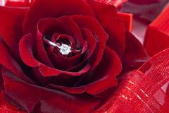 Red roses with ring. Red roses isolated on white background with red ribbons around it and a diamond ring in the middle Stock Photo