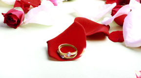 Red roses and ring Stock Images