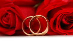 Red roses and rings isolated. On the white background Royalty Free Stock Photography
