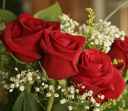 Red roses. For romantic occasion Stock Image