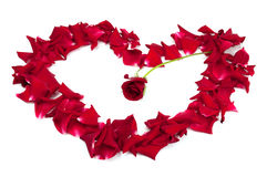 Red roses and rose petals Royalty Free Stock Image