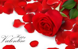 Red roses and rose petals on white background Royalty Free Stock Photography