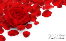 Red roses and rose petals on white background Stock Image