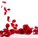 Red roses and rose petals on white background Stock Photography