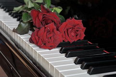 Red roses. Red rose on piano keyboard Stock Images
