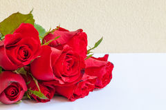 Red roses. Red rose is the symbol of real love royalty free stock images