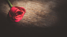 Red roses. Red rose on the table Royalty Free Stock Photography