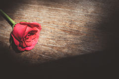 Red roses. Red rose on the table Stock Photos