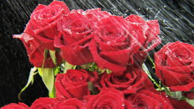 Red Roses Rotating in Heavy Rain stock footage