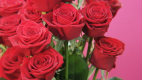 Red Roses Rotating on Pink Background stock video