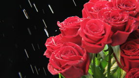 Red Roses Rotating in the Rain stock video
