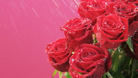 Red Roses Rotating in the Rain stock footage