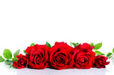 Red roses in row over white Royalty Free Stock Photos